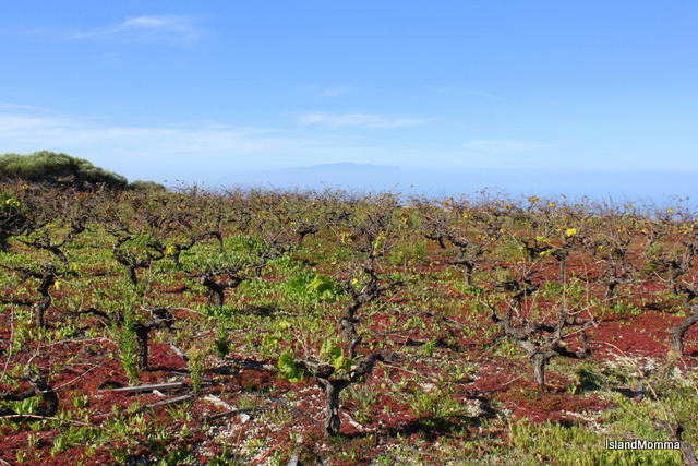 Terraced vineyard fronts the Atlanic and the misty island of La Gomera