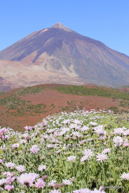 Rosalillo and El Teide