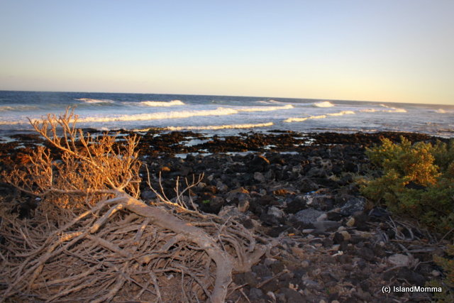 It had been a fine day for wind and kite surfers, but as dusk began to fall and the tide came in the waves were becoming gentler and this driftwood tossed up on the rock pools was caught in the sun's final rays.
