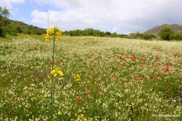 fields of wildflowers