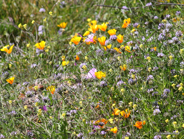 tangle of wildflowers