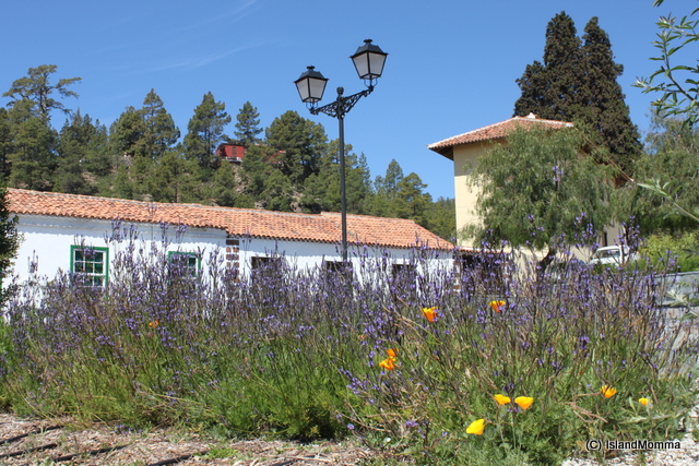 wildflower beds square vilaflor