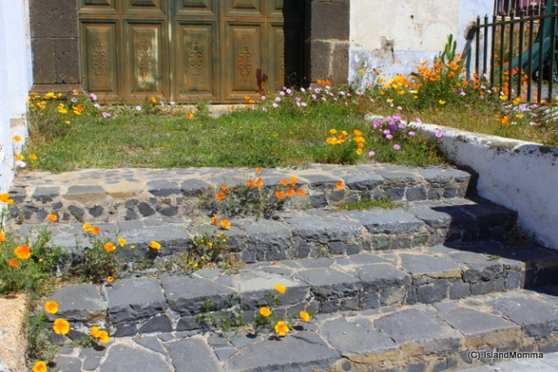 wildflowers on steps vilaflor