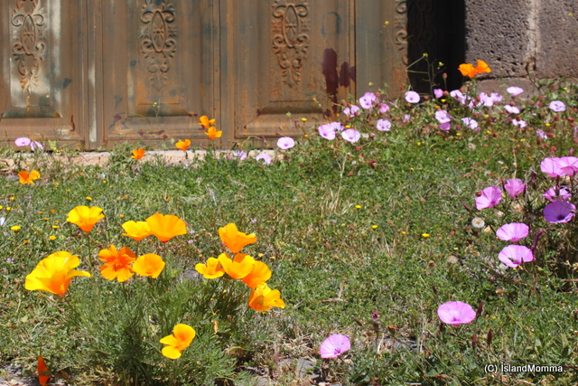 purple poppies and california poppies vilaflor