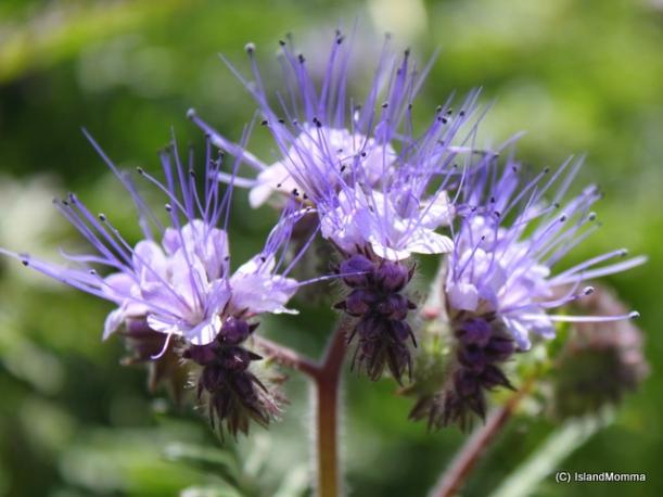 flowers vilaflor
