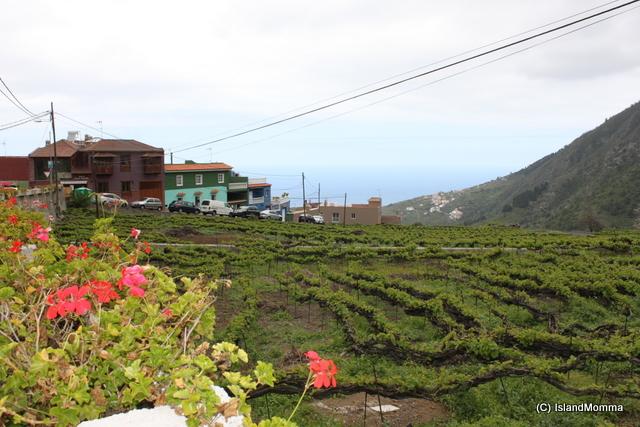Vineyard outside a guachinche in Pinolere