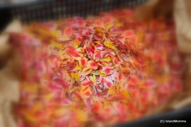 Crates of petals wait to be used