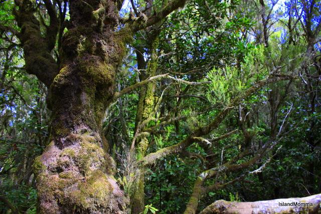 Parque Nacional Garajonay La Gomera