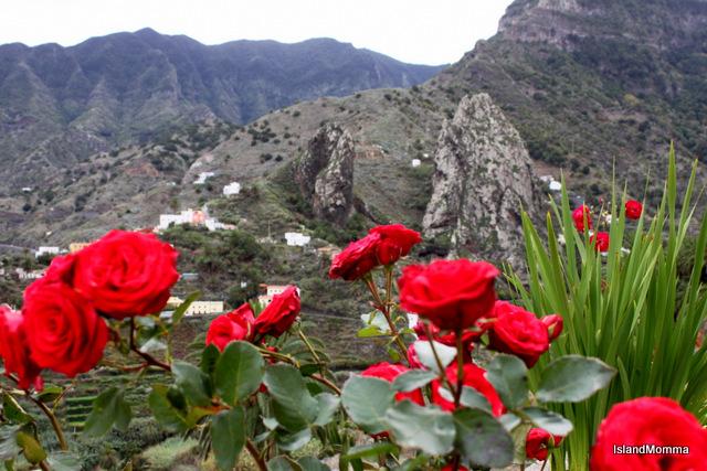 flowers overlooking valley