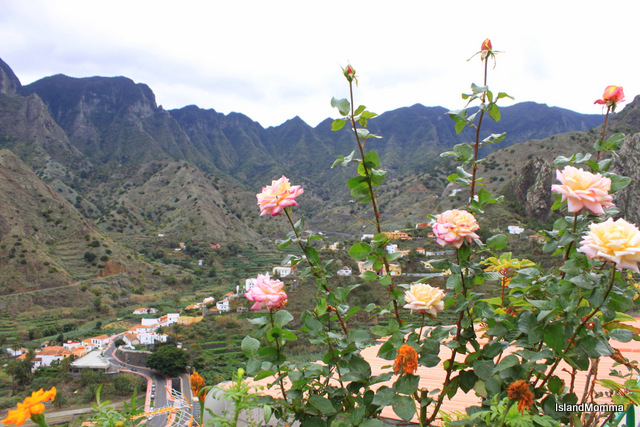 roses overlooking valley
