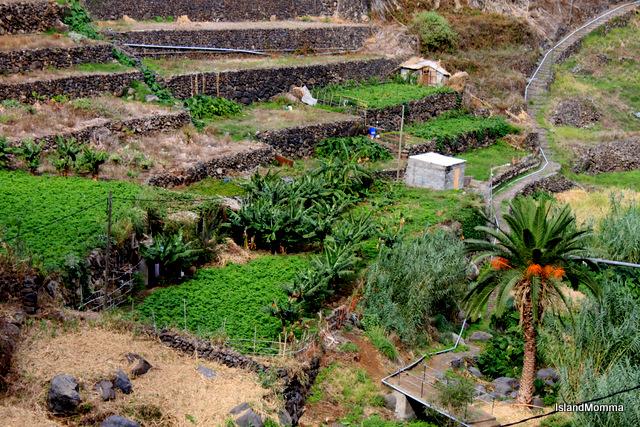 terraces of Hermigua