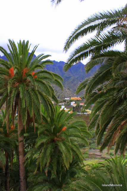 through palms to hermigua