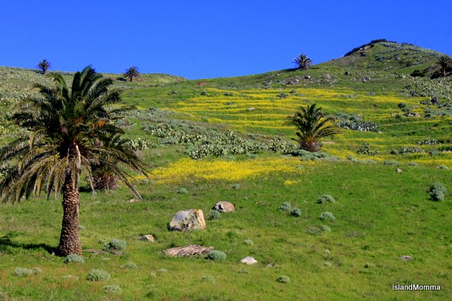Spring flowers in La Gomera