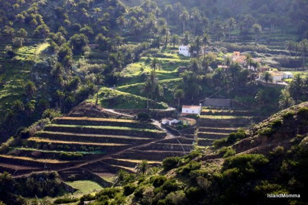 Agricultural terraces around the hillsides of Alojera