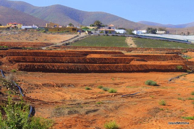 Soil erosion is a chronic problem in Fuerteventura which has an average rainfall of something under 6 inches per year