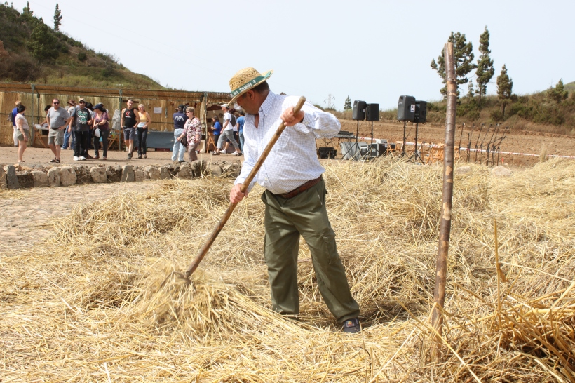 Preparing for demonstration of threshing at the festival in El Tanque, Tenerife
