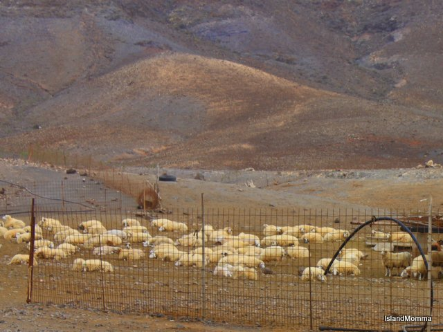 Sheep pens at La Pastora