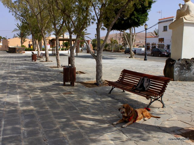 Waiting patiently in the shade while I take snaps in Tetir, Fuerteventura