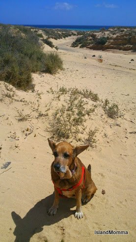 Yeah, it was kind of windy in Fuerteventura. On the dunes of Jandia looks as if she is about to take flight!