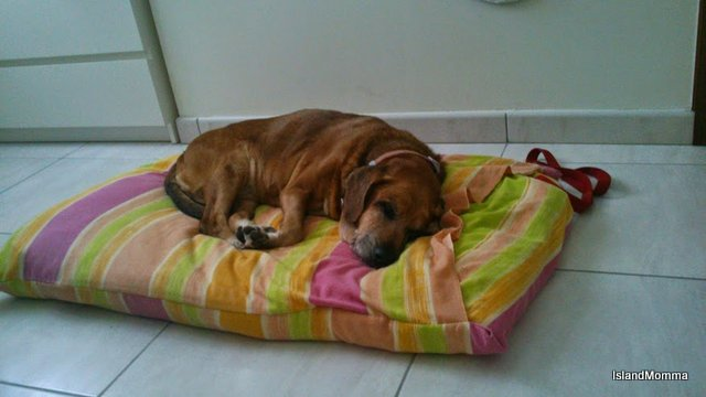 """Tired out after traveling Trix just curled up in yet another new """"home"""""""