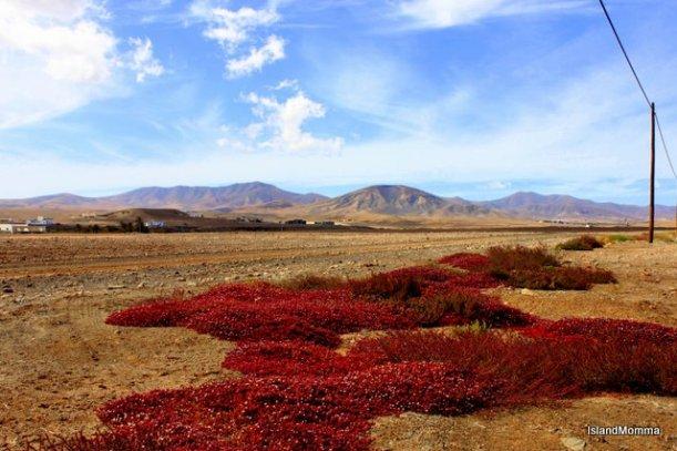 Fuerteventura Canary Islands Landscape