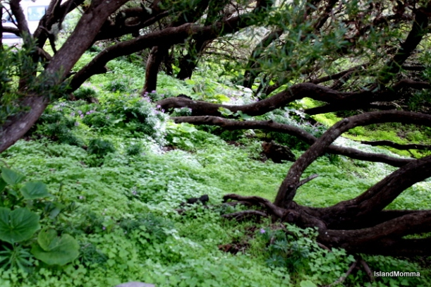 woodland el hierro