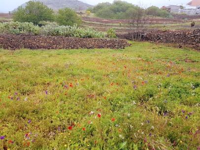 Spring meadow in Valle de Arriba